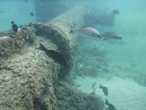 Go beyond snorkeling Gold Coast